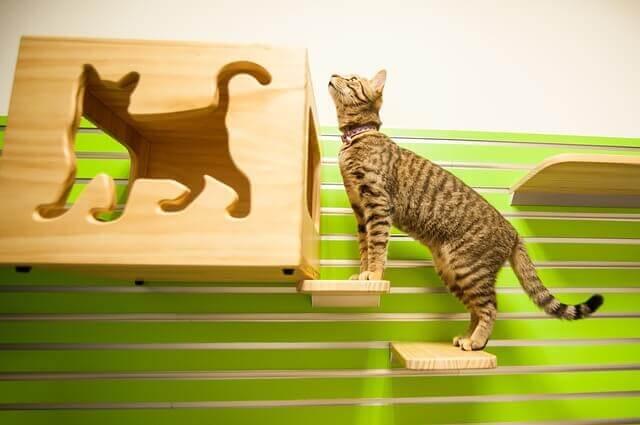 10 sinais comuns de doença em gatos