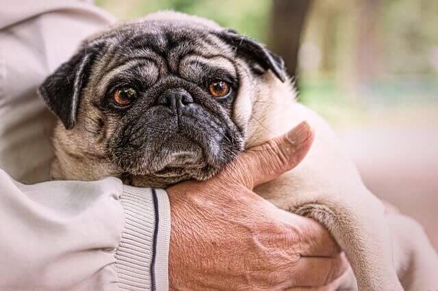 10 sinais da velhice em cães