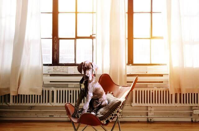 10 sinais de que seu cão está estressado