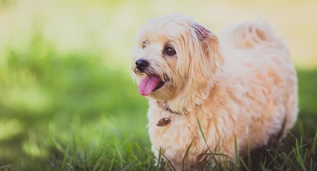 Diarreia aguda (súbita) do cão