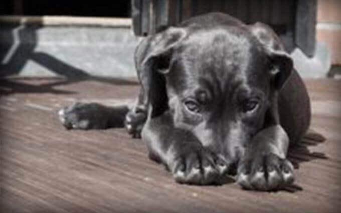 Diarreia em cães: causas e tratamento