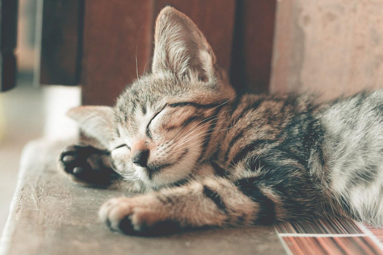 Diarreia crônica em gatos | Causas, Sintomas e Tratamento
