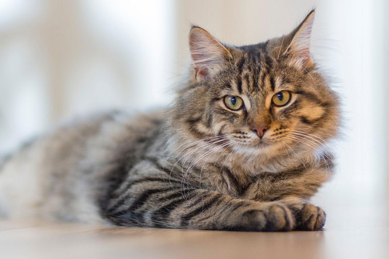 Diarreia em Gatos | Causas, Sintomas e Tratamento