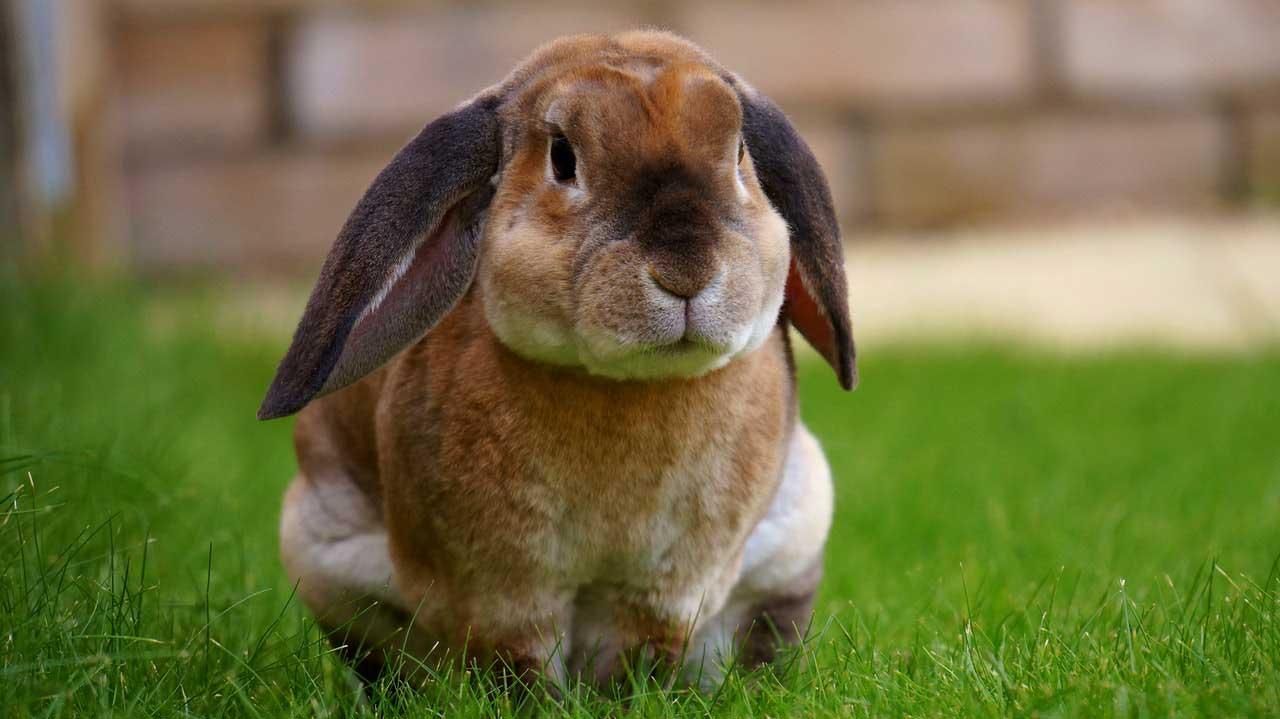 Dicas simples para manter seu coelho saudável