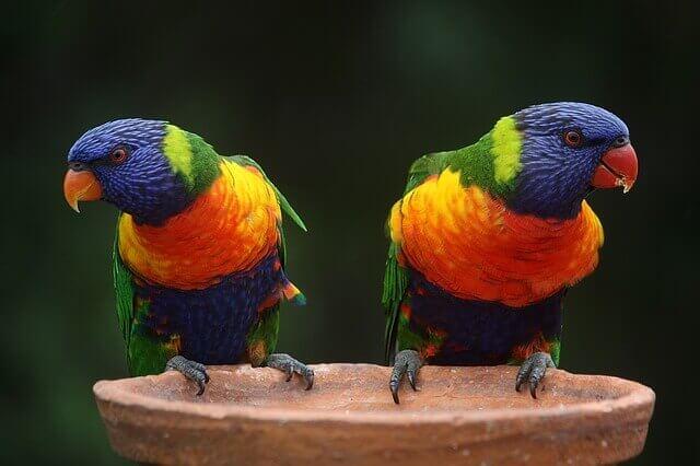 Diferentes espécies de papagaios estão na mesma gaiola