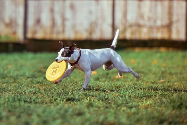 Dificuldades Respiratórias em cães