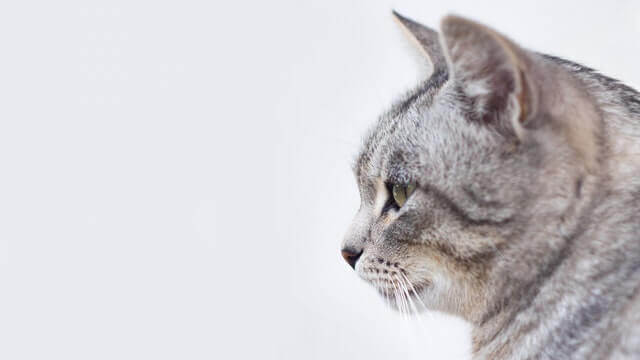 Disfunção cognitiva em gatos
