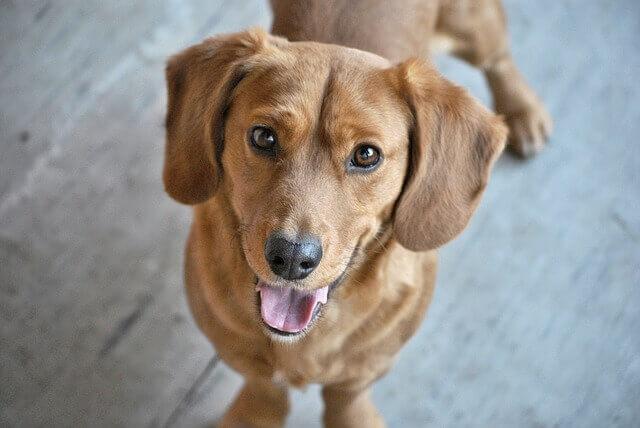 Doença dentária em cães