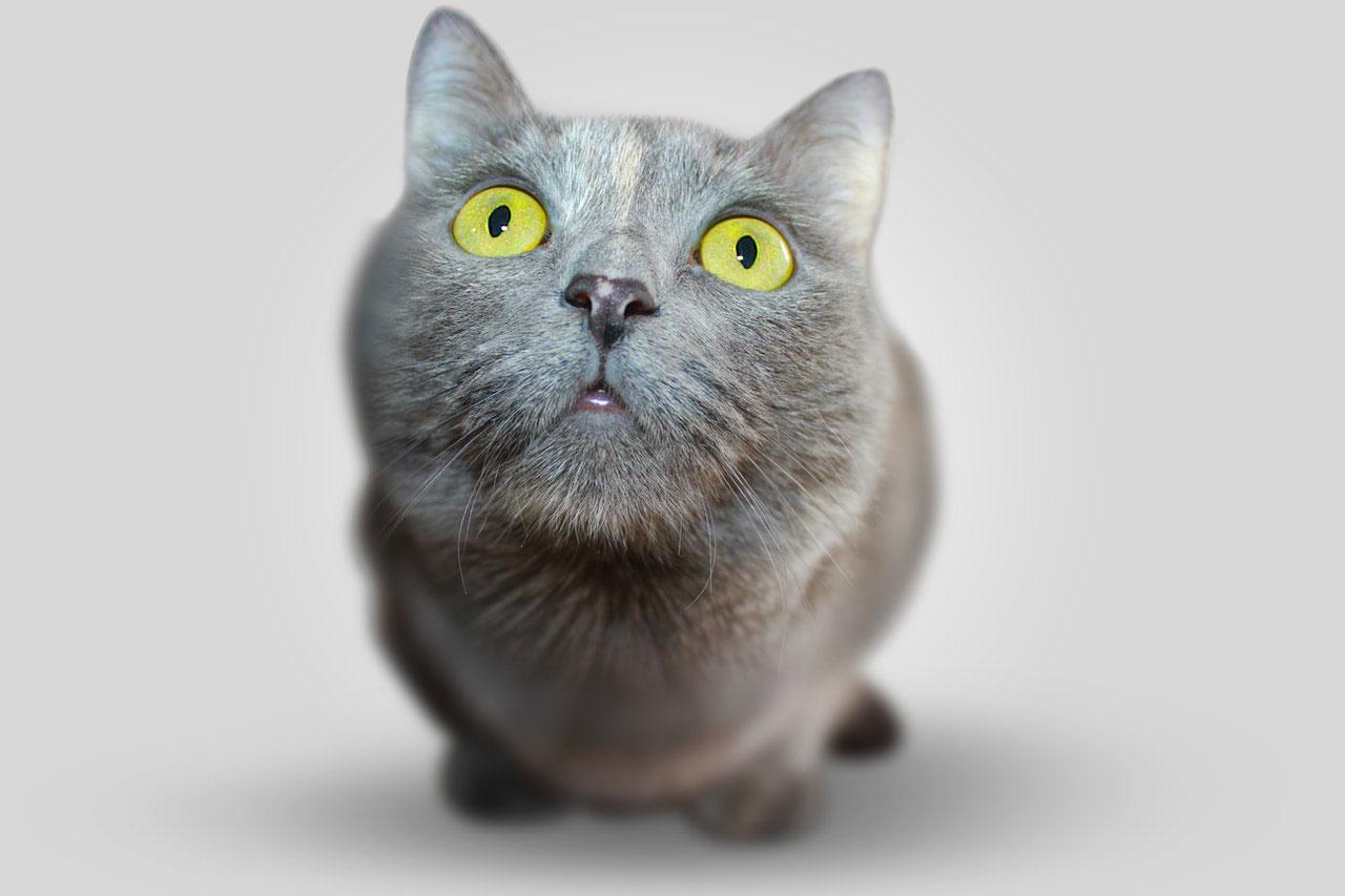Doença gastrointestinal em cães e gatos