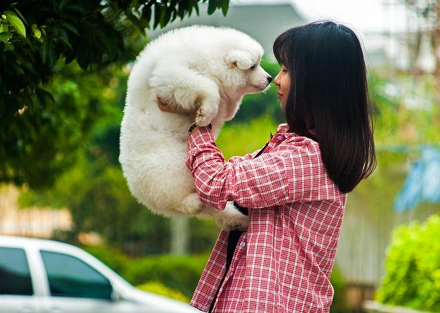 Doença Inflamatória da Pele em Cães