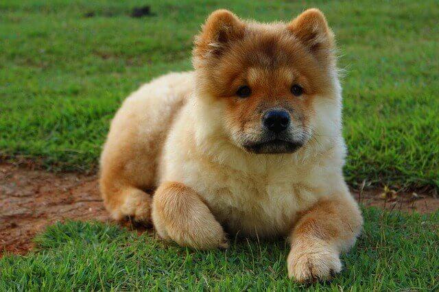 Doença do nervo óptico em cães