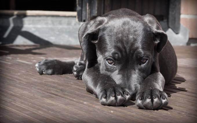 Doença renal em cachorros