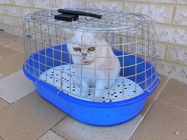 Doença renal policística em gatos