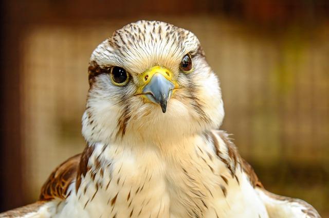 Doenças bacterianas em aves