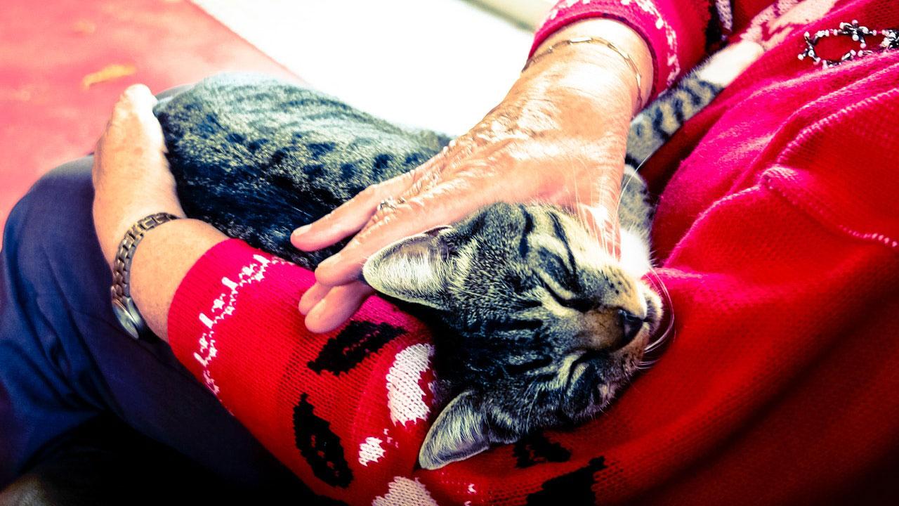 Doenças Comuns em Cães e Gatos Idosos