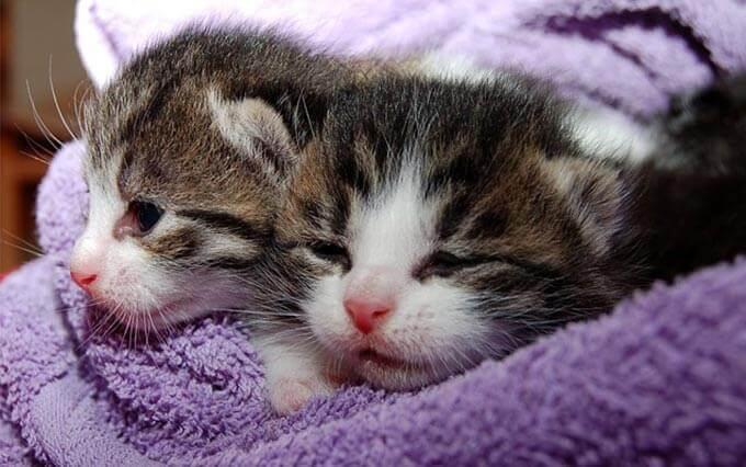 5 doenças raras do gato