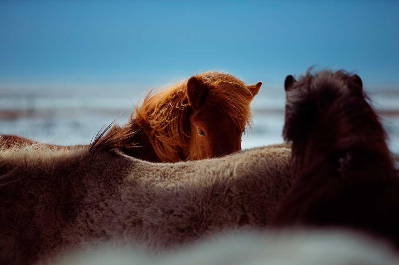 Dor nas costas em cavalos