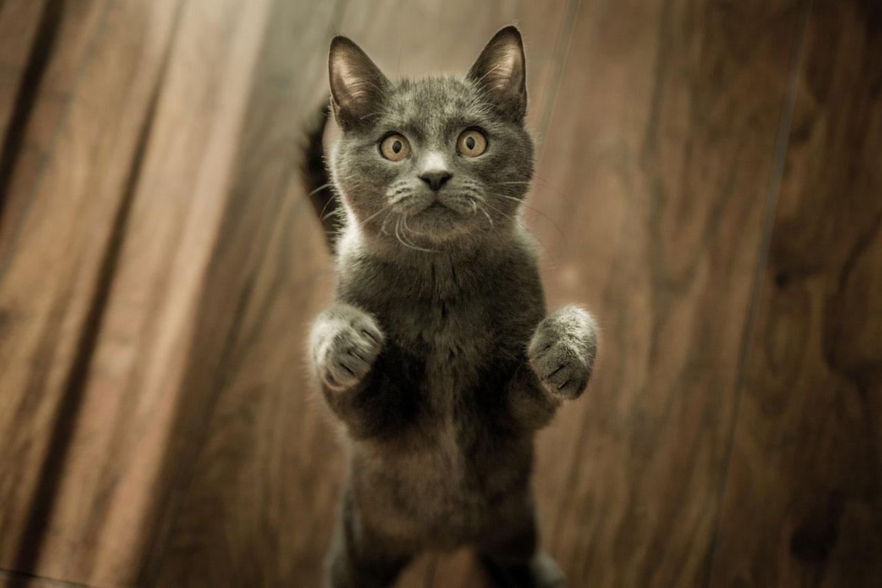 Dor nas costas em gatos