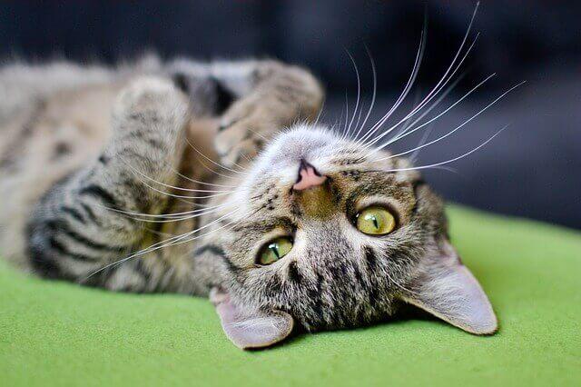 Efeitos colaterais da anestesia em gatos