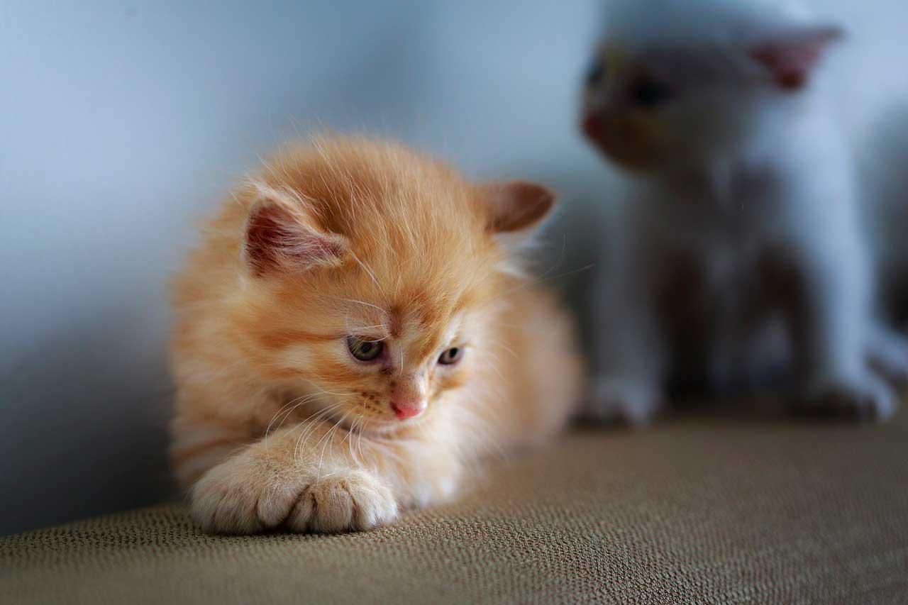 Envenenamento por etanol em gatos