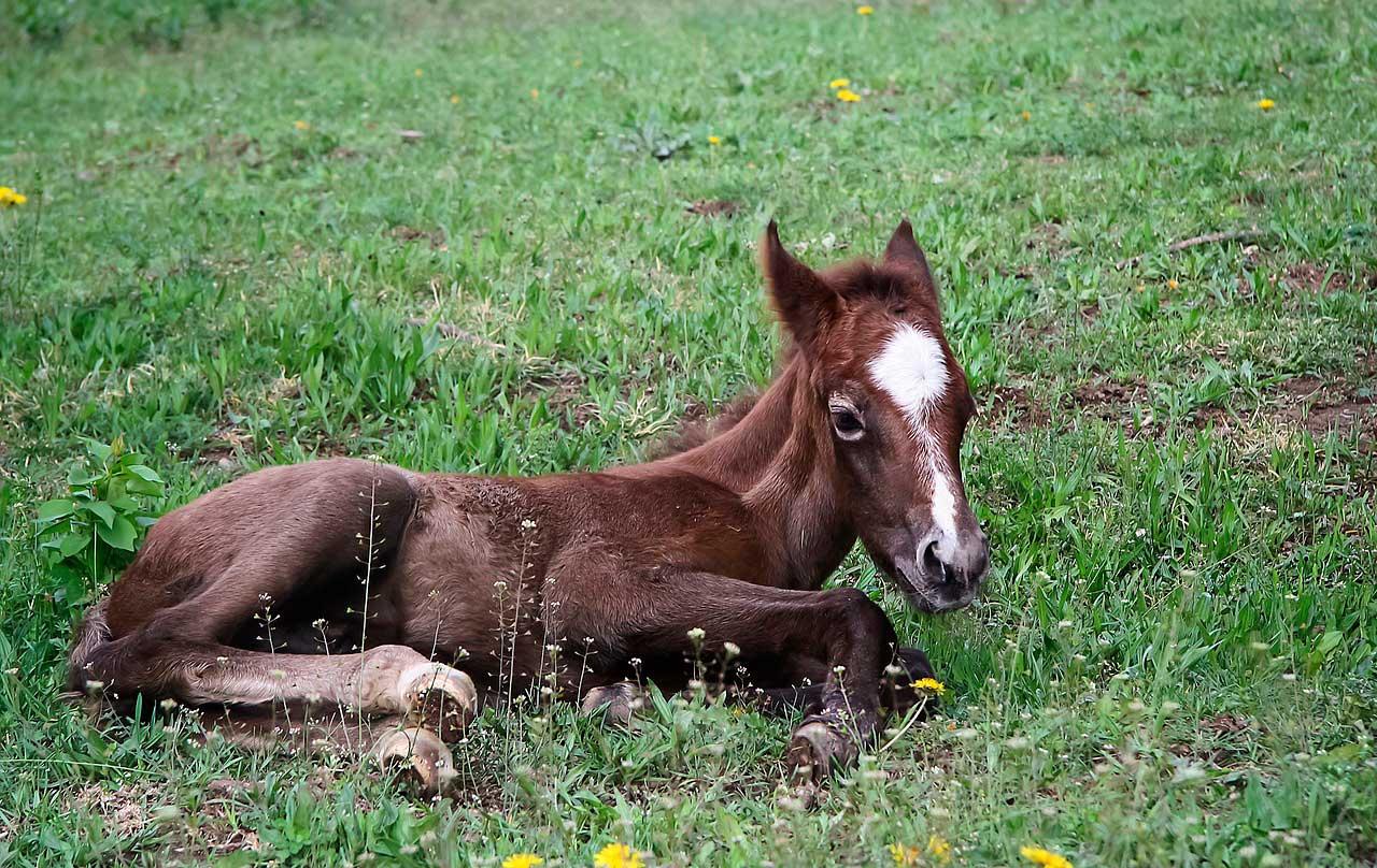 Epifisite em Cavalos