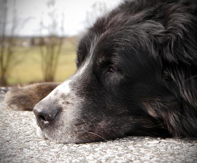 Falta de controle da bexiga em cães