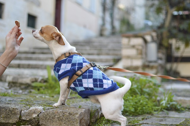 Benefícios da fibra para cães