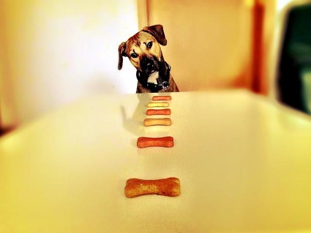 Flatulência em Cães