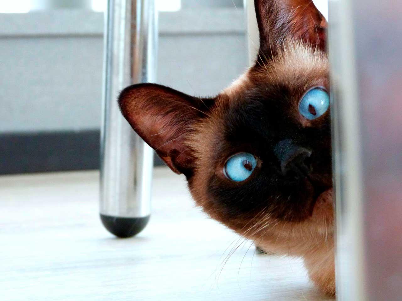 A melhor fonte de ômega 3 para gatos
