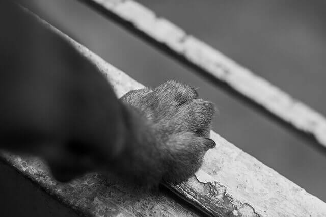 Formigamento pata de cachorro (Dor neuropática em cães)