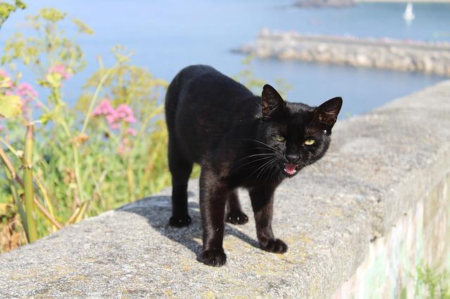 Gato agressivo | Por que e Causas