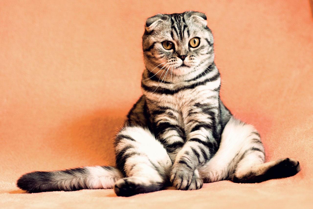 Gato estressado | Sintomas e Alívio