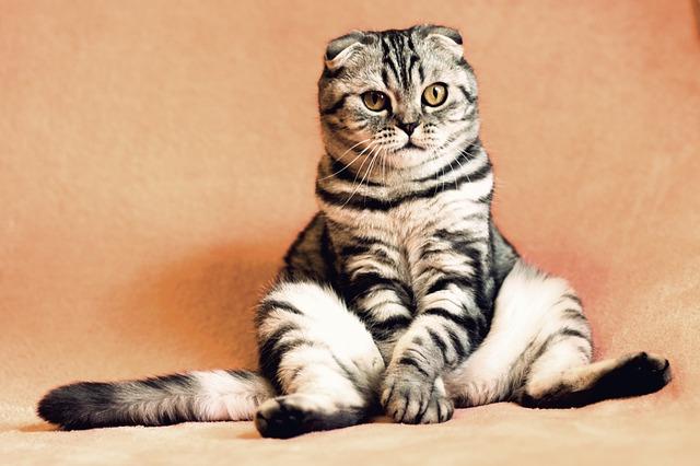 Gato pode ter uma dor de estômago?
