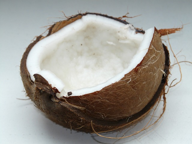 Gatos podem comer coco?