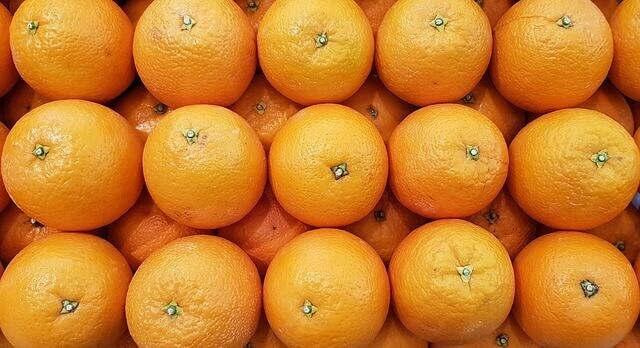 Gatos podem comer laranjas? Gatos pode comer limões?