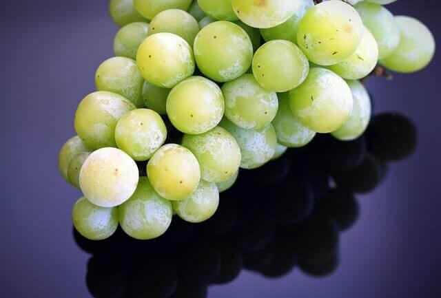 Gatos podem comer uvas?