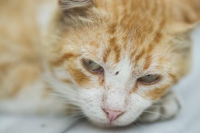 Gatos podem ficar deprimidos?