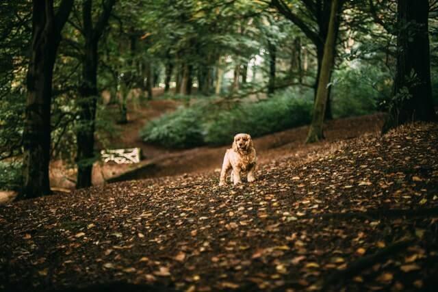 Glaucoma em Cães e Gatos