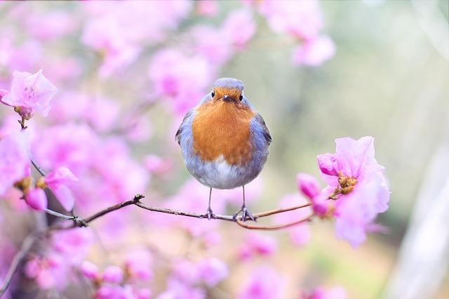 Gripe aviária em aves