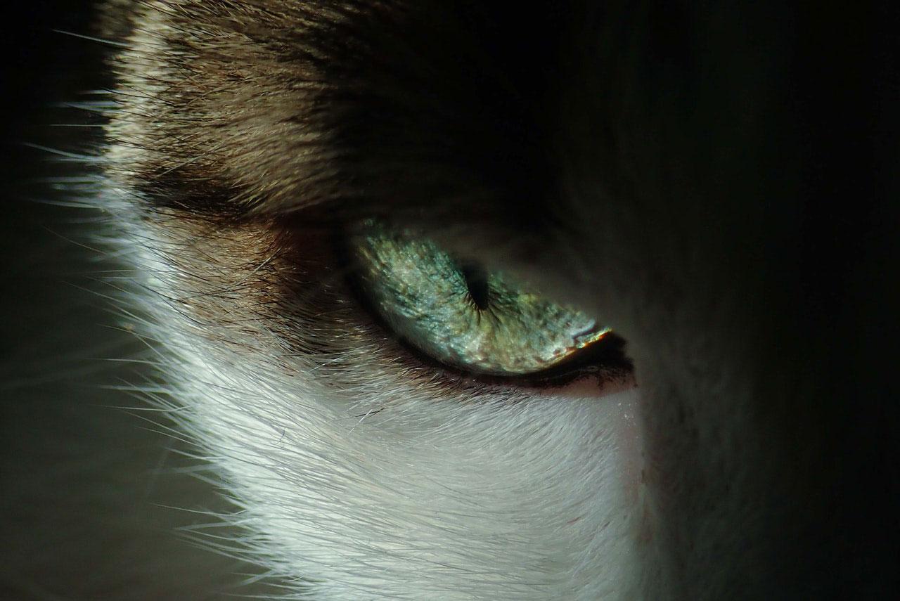 Gripe de Gato | Causas, Sintomas e Tratamento