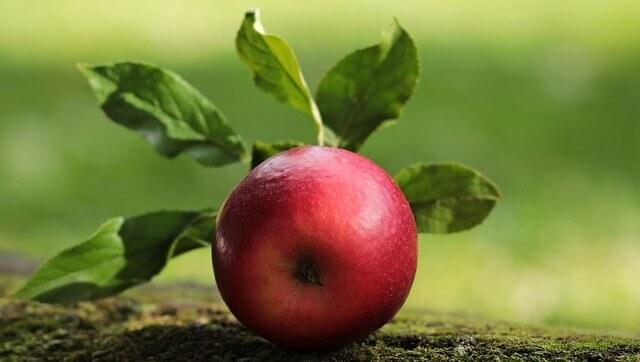 Hamsters podem comer maçãs?