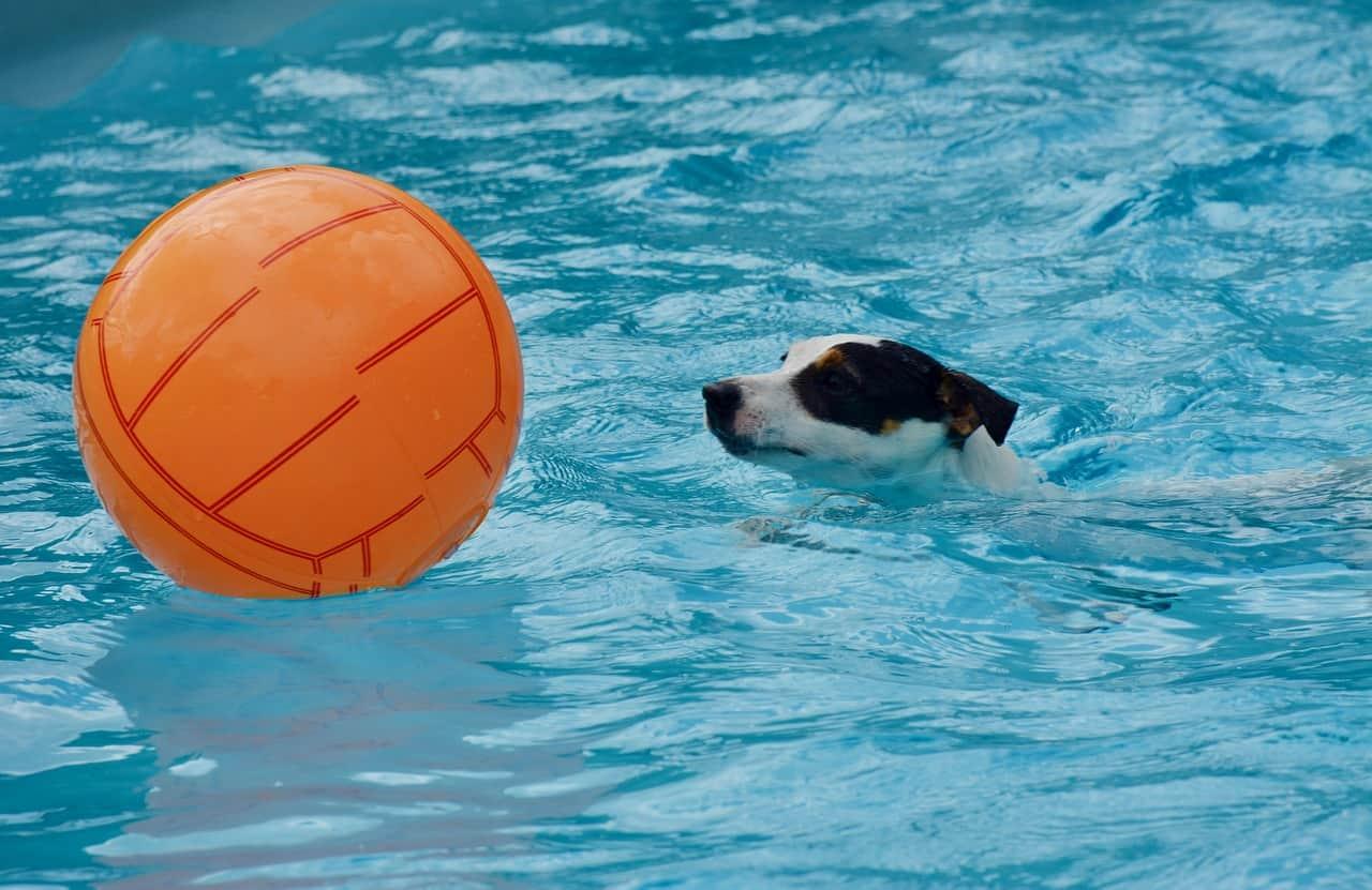 Hidroterapia para cães | Benefícios para a saúde dos cães