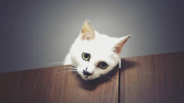 Hipertireoidismo em gatos