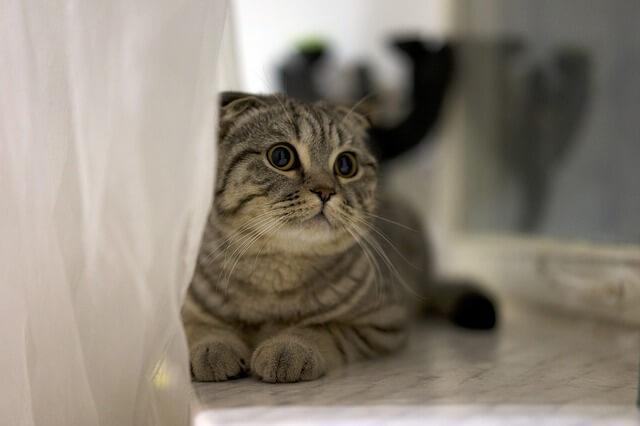Hipoglicemia em gatos
