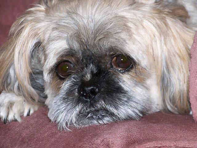 Ibuprofeno para cães: você pode dar ibuprofeno para cachorro?