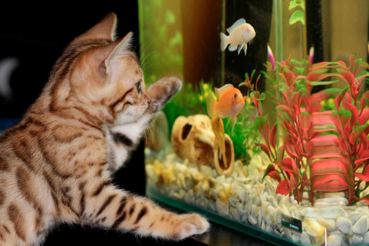 Infecção por flavobactérias em peixes
