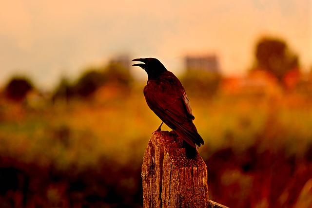 Infecção por levedura gástrica em aves