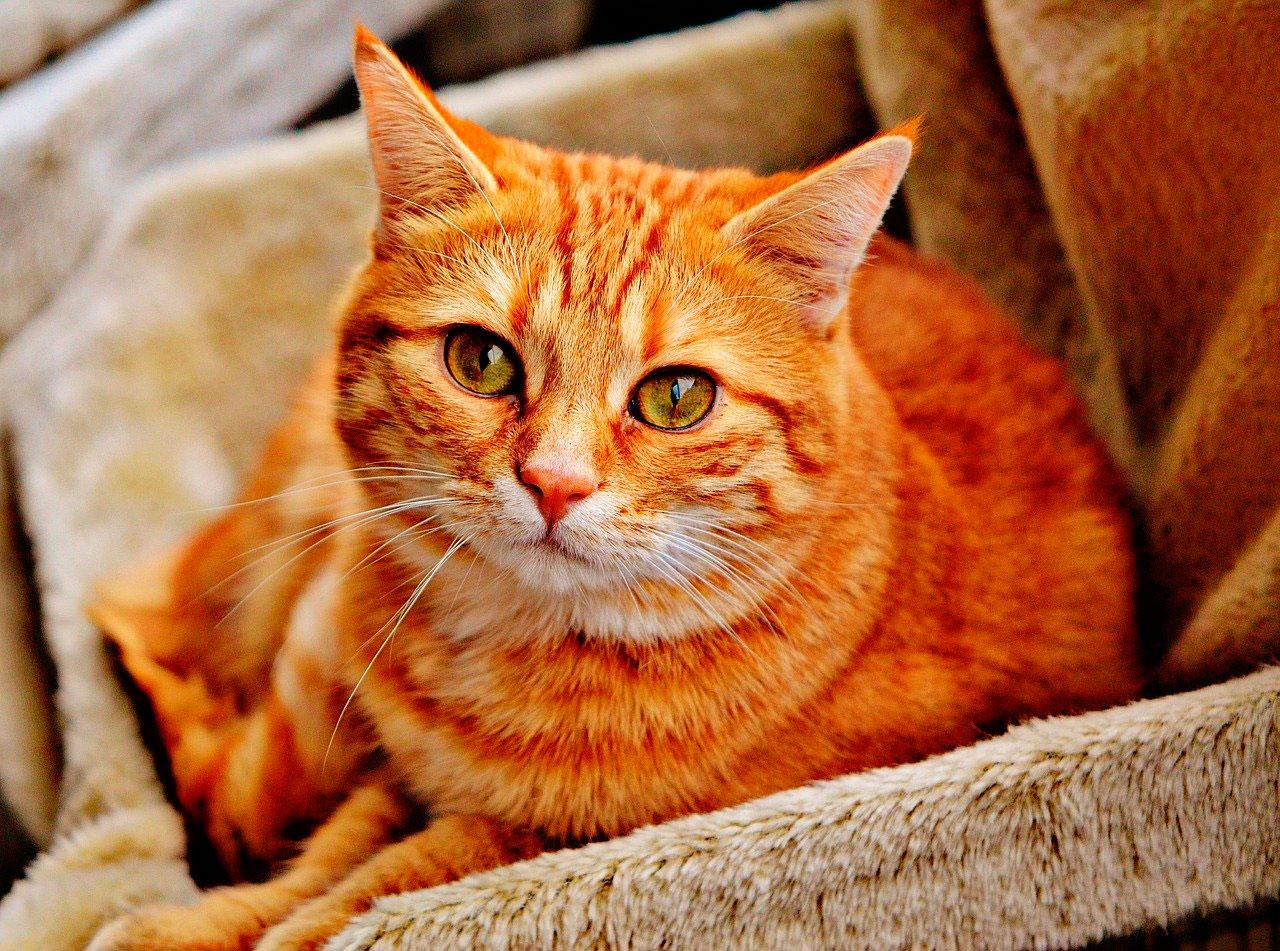 Infecção Viral Intestinal (Rotavírus) em Gatos