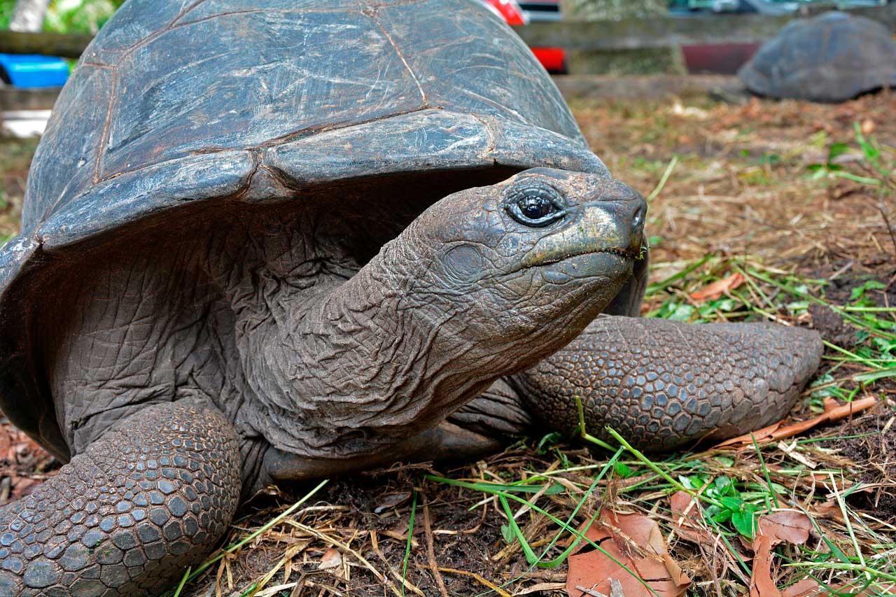 Infecções de ouvido em tartarugas
