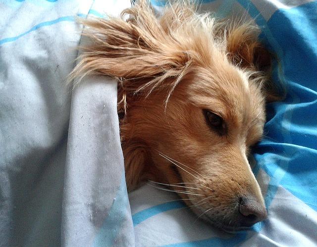 Infecções de ouvido em cães | Sintomas, causas e tratamentos